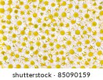 Group Of Chamomile Flower Head...