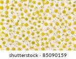 group of chamomile flower heads ... | Shutterstock . vector #85090159
