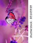 Monarch Butterfly Vertical...