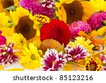 background of many different colorful autumn flowers - stock photo