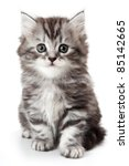Stock photo grey kitten isolated on white 85142665