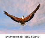 sea eagle computer generated 3d ... | Shutterstock . vector #85156849