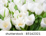 White Tulips Background