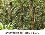 interior of primary tropical... | Shutterstock . vector #85171177