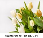 beautiful tulips | Shutterstock . vector #85187254