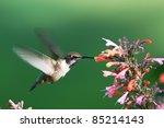 Hummingbird Taken At During Mi...