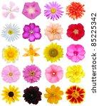 a set of bloomings in summertime | Shutterstock . vector #85225342