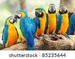 group of colorful macaw on the... | Shutterstock . vector #85235644