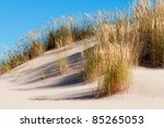 Grasses Growing On Sand Dune I...