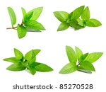 Fresh Green Mint Isolated On...