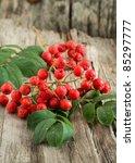 Autumn still-life with rowan-berry on wooden background - stock photo