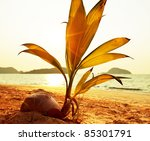 Palm tree sprout  on the beach - stock photo