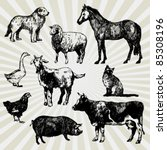 Set Of Home Animals Hand Drawn