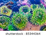 Green Sea Anemone Under Water...