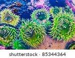 Green Sea Anemone Under Water...