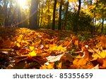 Fallen Leaves In Autumn Forest...