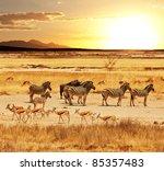 African Safari In Etosha Namibia