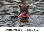 Alaskan Brown Bear At Brooks...