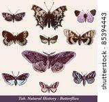 Butterflies   Vintage Engraved...