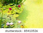 Nenufar Water Lilies On Green...
