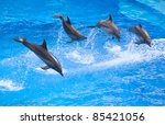 bottlenose dolphin in the... | Shutterstock . vector #85421056