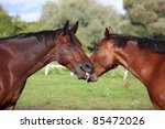 two brown horses playing with... | Shutterstock . vector #85472026