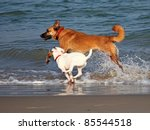Two Dogs Playing And Splashing...