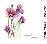 Watercolor  Cosmos Flowers  ...