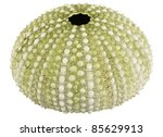 Sea Urchin Shell Isolated On...