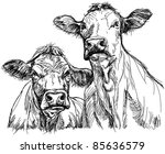 two cows   black and white... | Shutterstock . vector #85636579