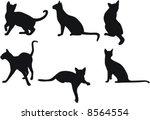 vector cats   Shutterstock .eps vector #8564554