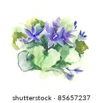 watercolor  campanula  | Shutterstock . vector #85657237