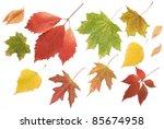 set of autumn leaves  maple ...   Shutterstock . vector #85674958