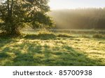 Meadow  Tree And Sunlight