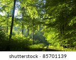 Road in beech forest - stock photo