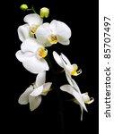 Orchid Phalaenopsis. Flowers...