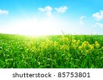canola field in morning time. | Shutterstock . vector #85753801