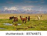 llamas on grassy bolivian... | Shutterstock . vector #85764871