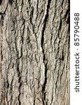 Tree Crust