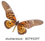 Small photo of Papilio (Druryia) antimachus butterfly, a isolated on white background.