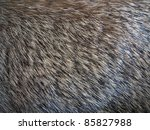 Close up photo of Fur