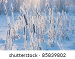 Cattail In The Frost
