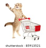 Stock photo cat with shopping cart isolated on white 85913521