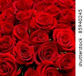Stock photo many red roses shot in shallow dof 85940245