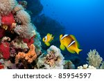 Beautiful Reef With Copy Space...