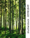 green forest with sun and rays... | Shutterstock . vector #85981849