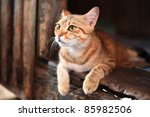 Stock photo cat on the house 85982506