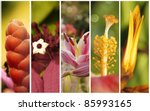 Collection Of Flowers Close Up...