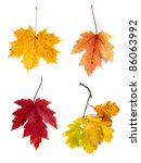 Autumn Leaves Isolated On Whit...