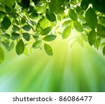 green leaves and sun | Shutterstock . vector #86086477